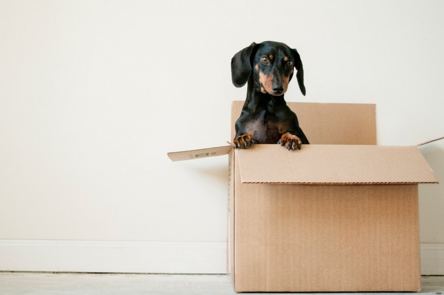 How to Destress Downsizing